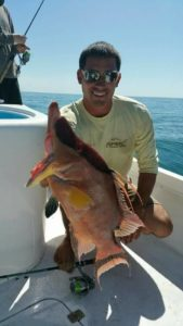 st pete beach hogfish