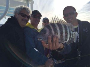 Sheepshead on St. Pete Beach